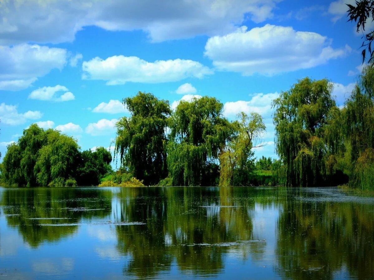 Лето пруд картинки