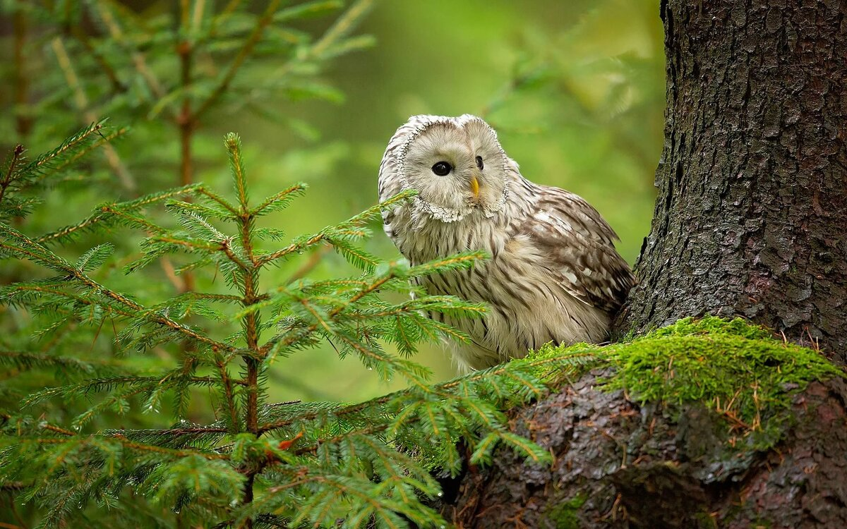 Картинки животных и птиц леса