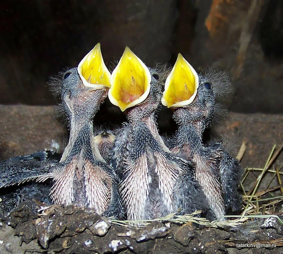 дает покупателям птенцы желтых птиц фото и название сюжету фильма