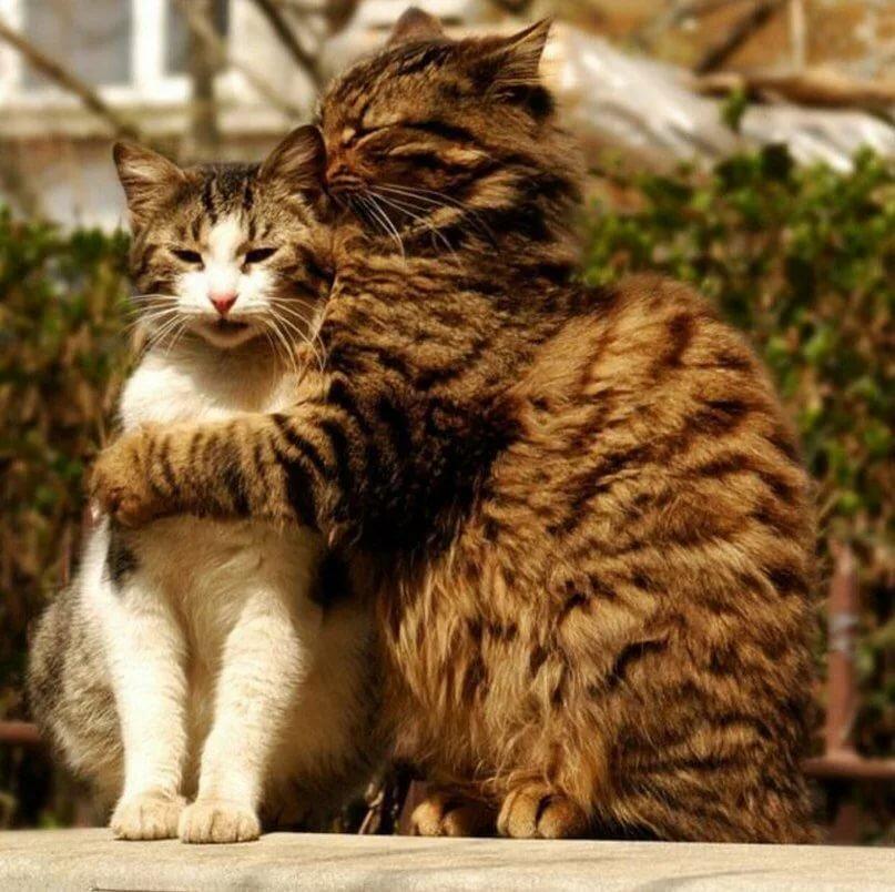Картинки котов пара
