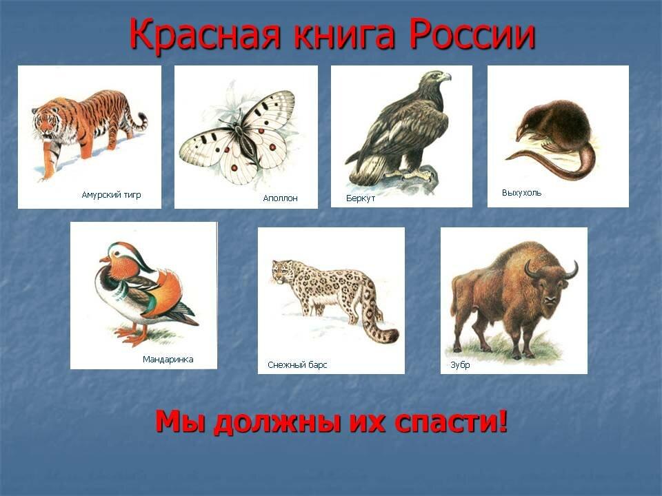 Животные в красной книге картинки для детей