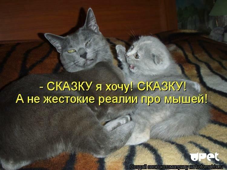 Интересные картинки про кошек с надписями