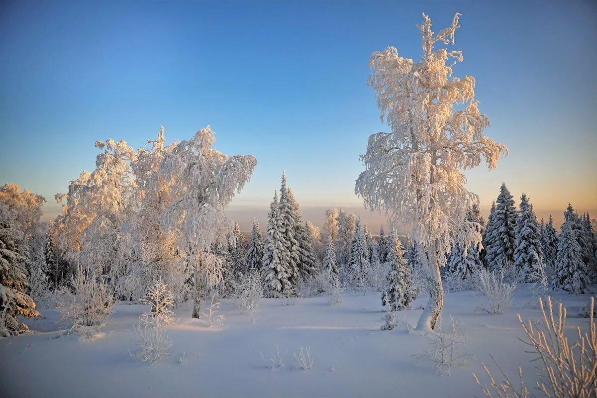 Картинки морозный лес