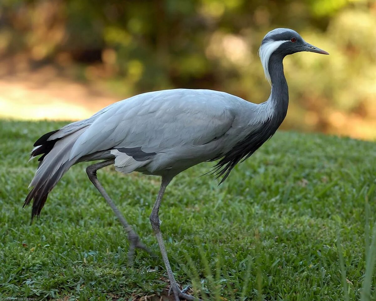 разбросала большие птицы россии с фото новый
