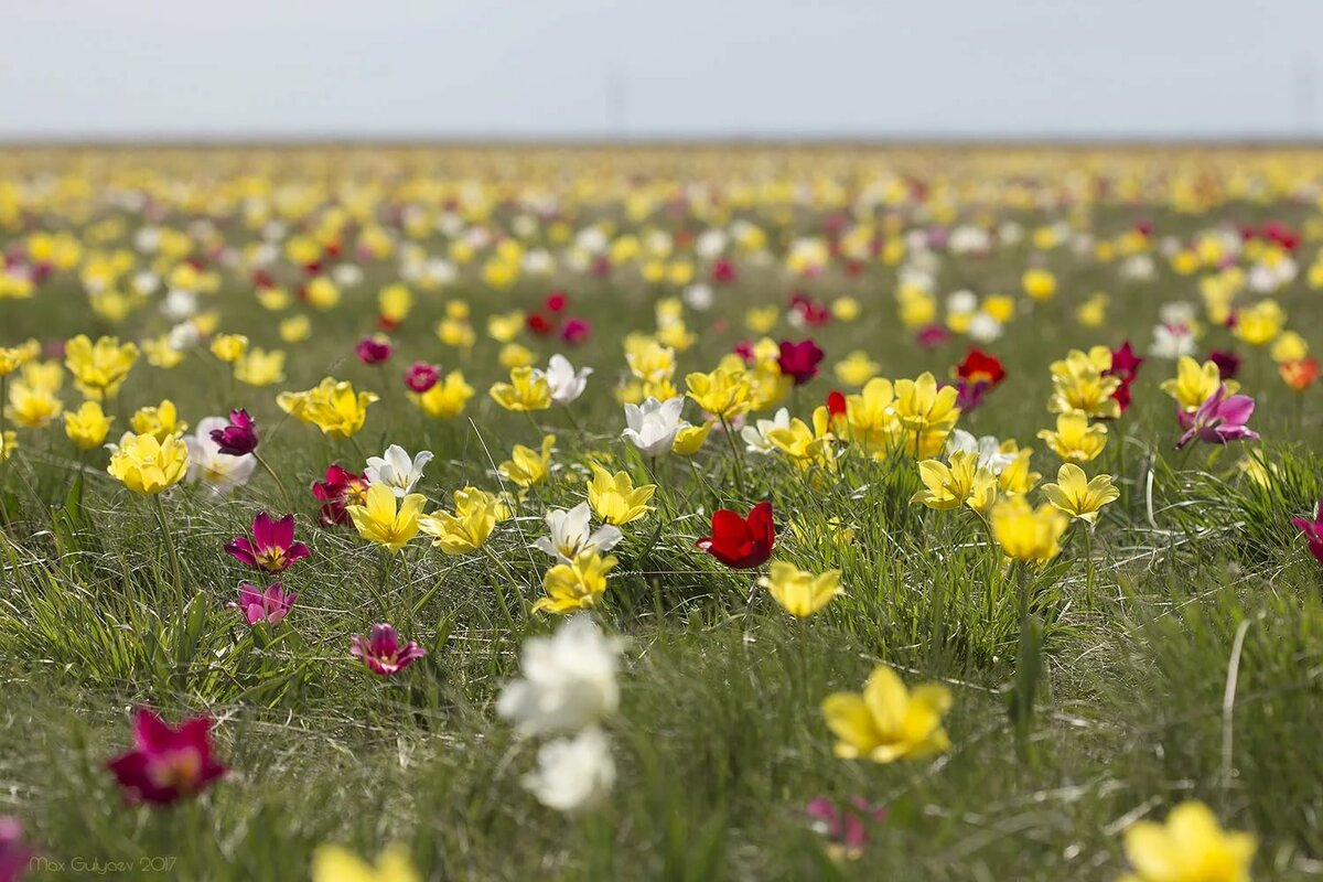 полевые цветы весенние север казахстана фото оставаться беспристрастной, когда