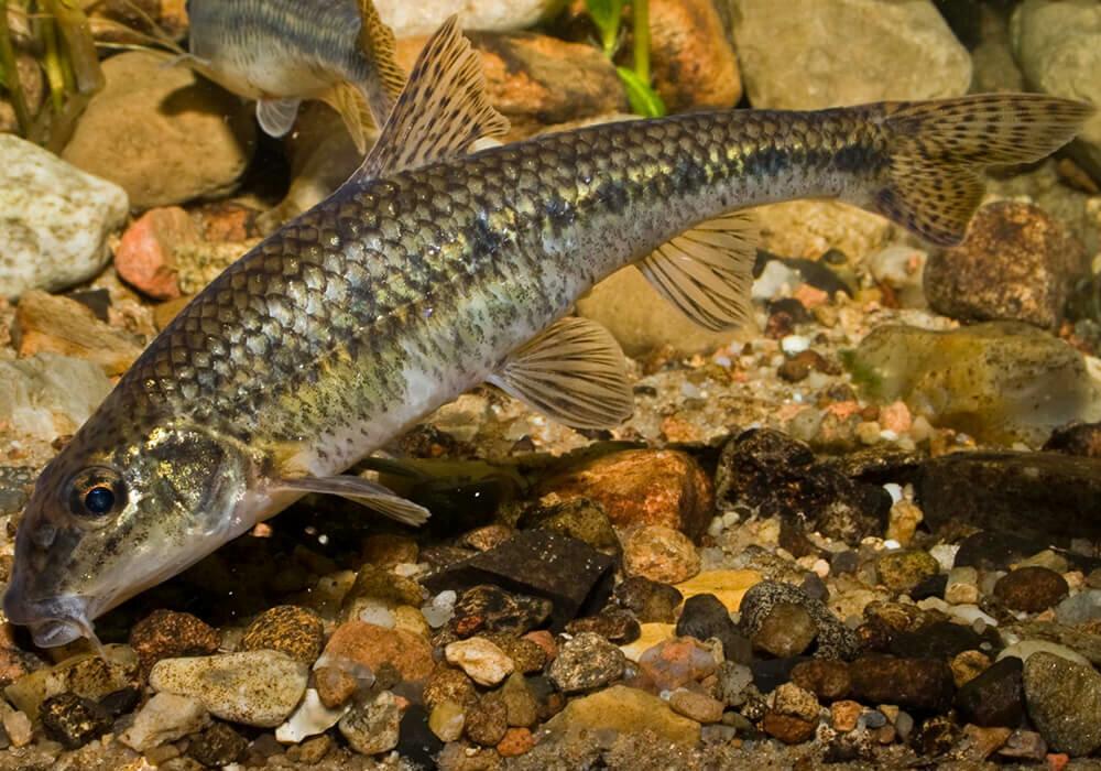 вид рыбы на картинке в реке сити