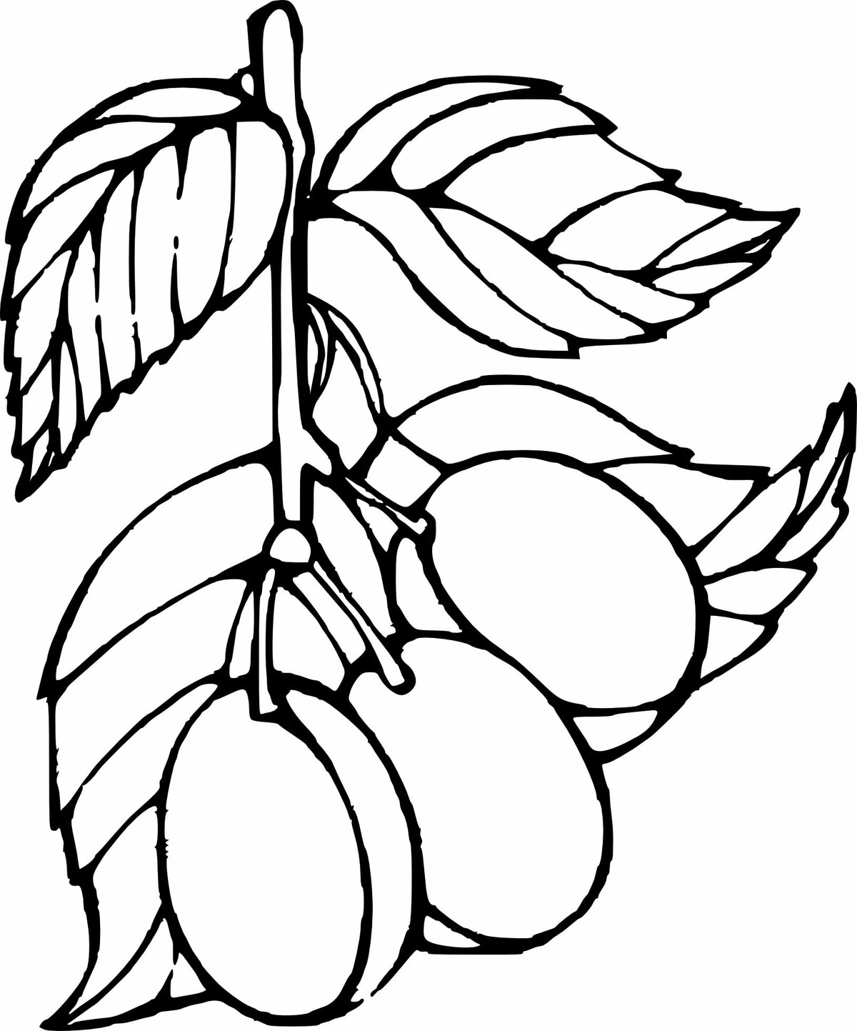 Картинка раскраска плоды деревьев