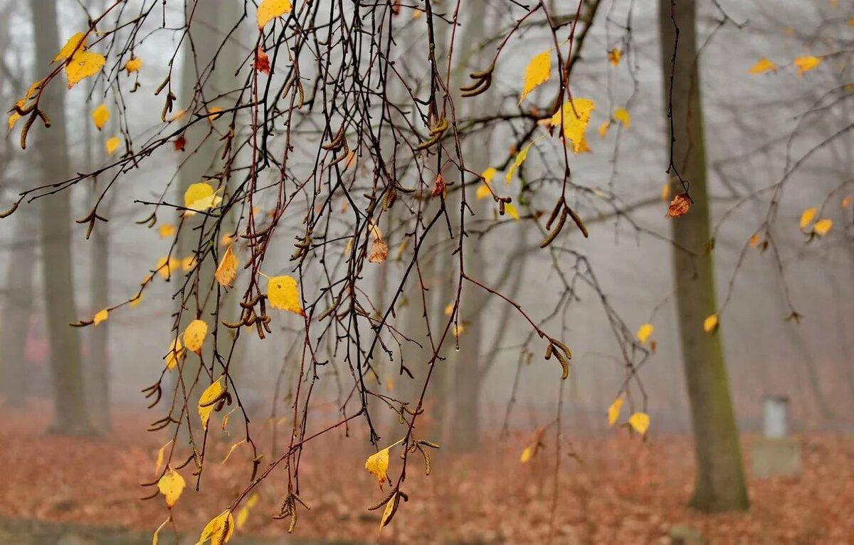 приготовления отнимает осенние деревья ветка картинки этом помогут прямоугольные