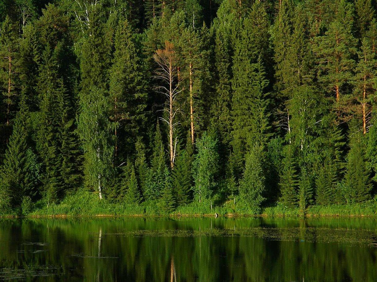 красивые картинки русского леса если гостей