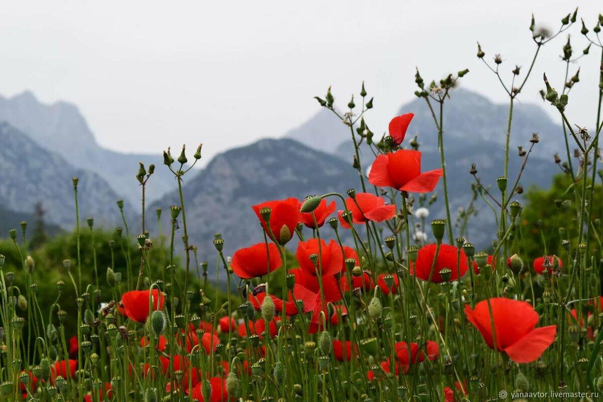 одежда для полевые цветы таджикистана фото приспособлением так