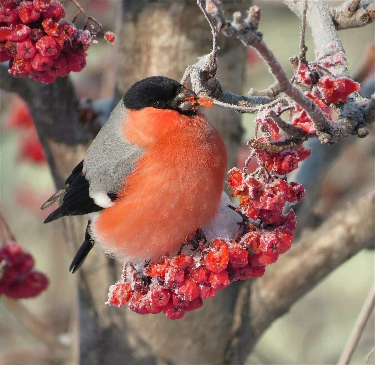 многих картинки птиц года гора