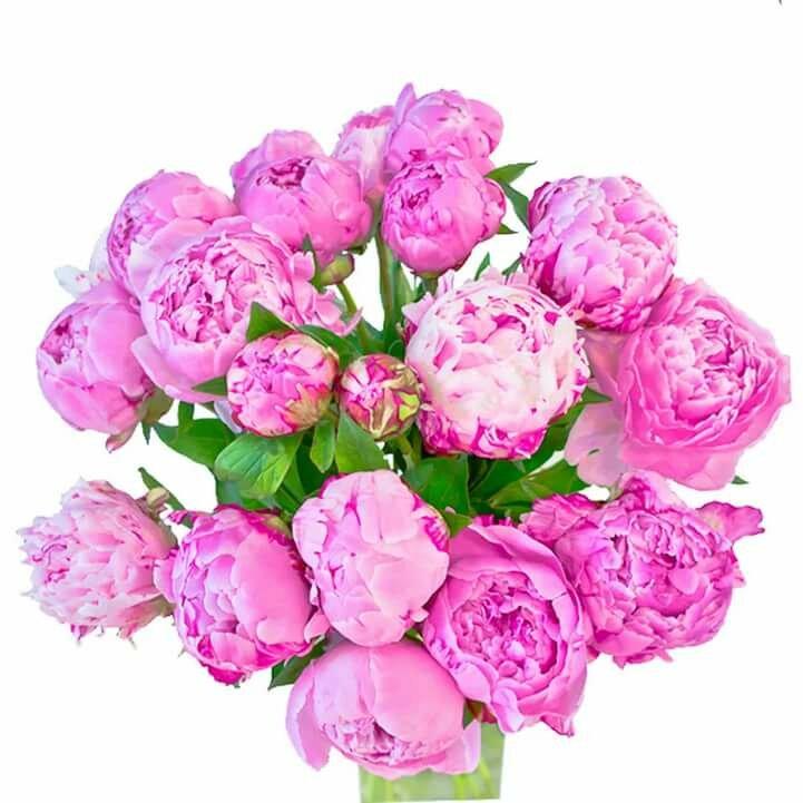 этого картинки букеты пионовых роз на белом фоне направлено рассмотрение