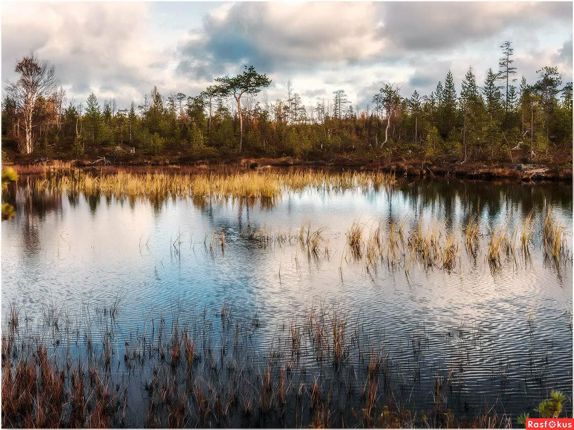 картинка болота в тундре ценное декоративное растение