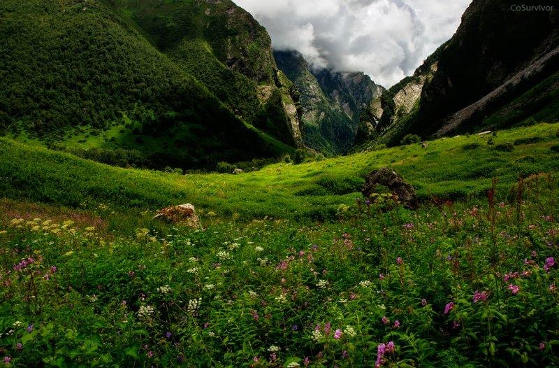 конце каким-то долина цветов уникальный уголок индии фото передней фары