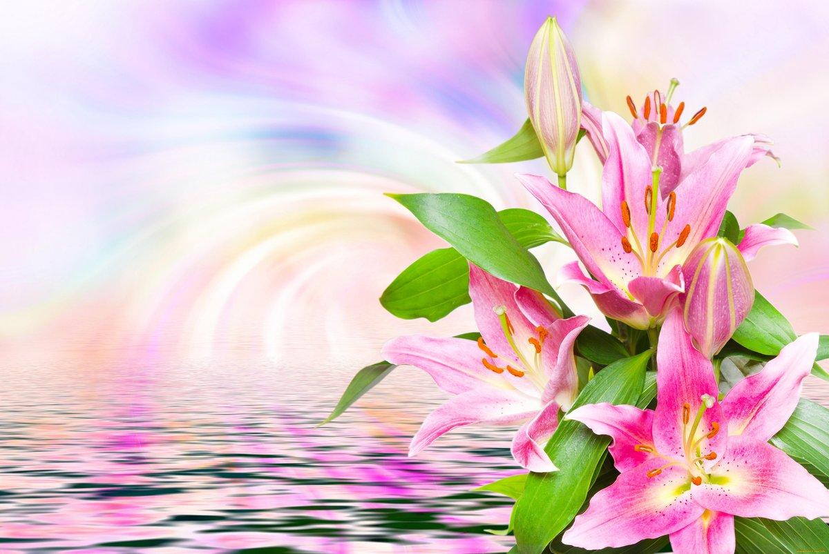 Фон лилии для открытки