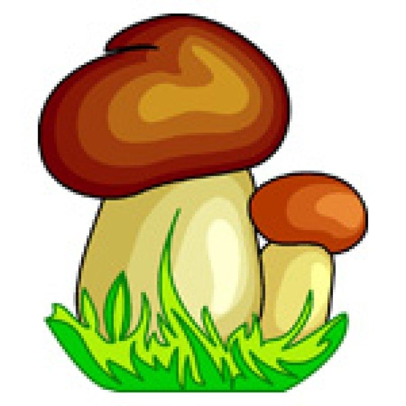Будь счастлив, картинки грибов для детей цветные красивые