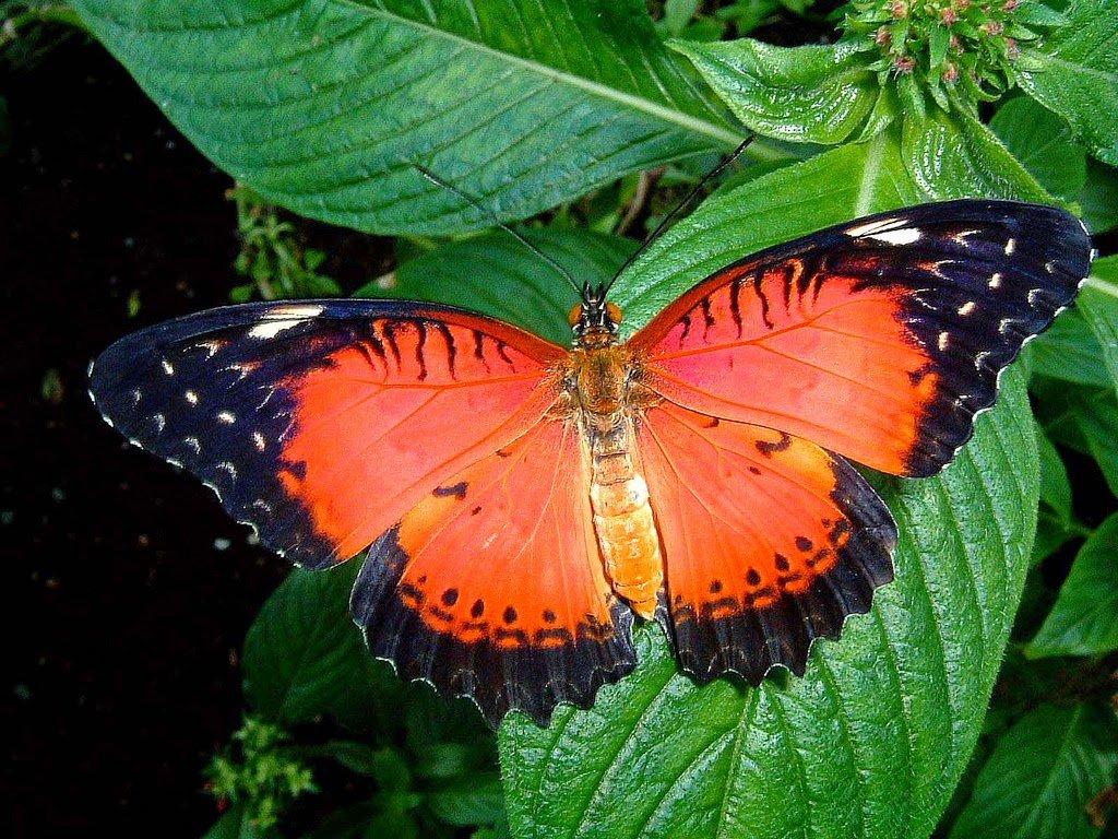 Открытки, тропические бабочки картинки с названиями
