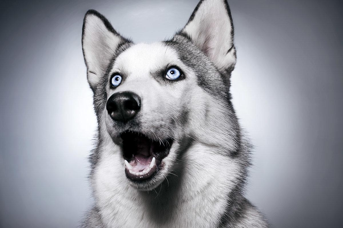 Картинки, смешная картинка на аву с собакой
