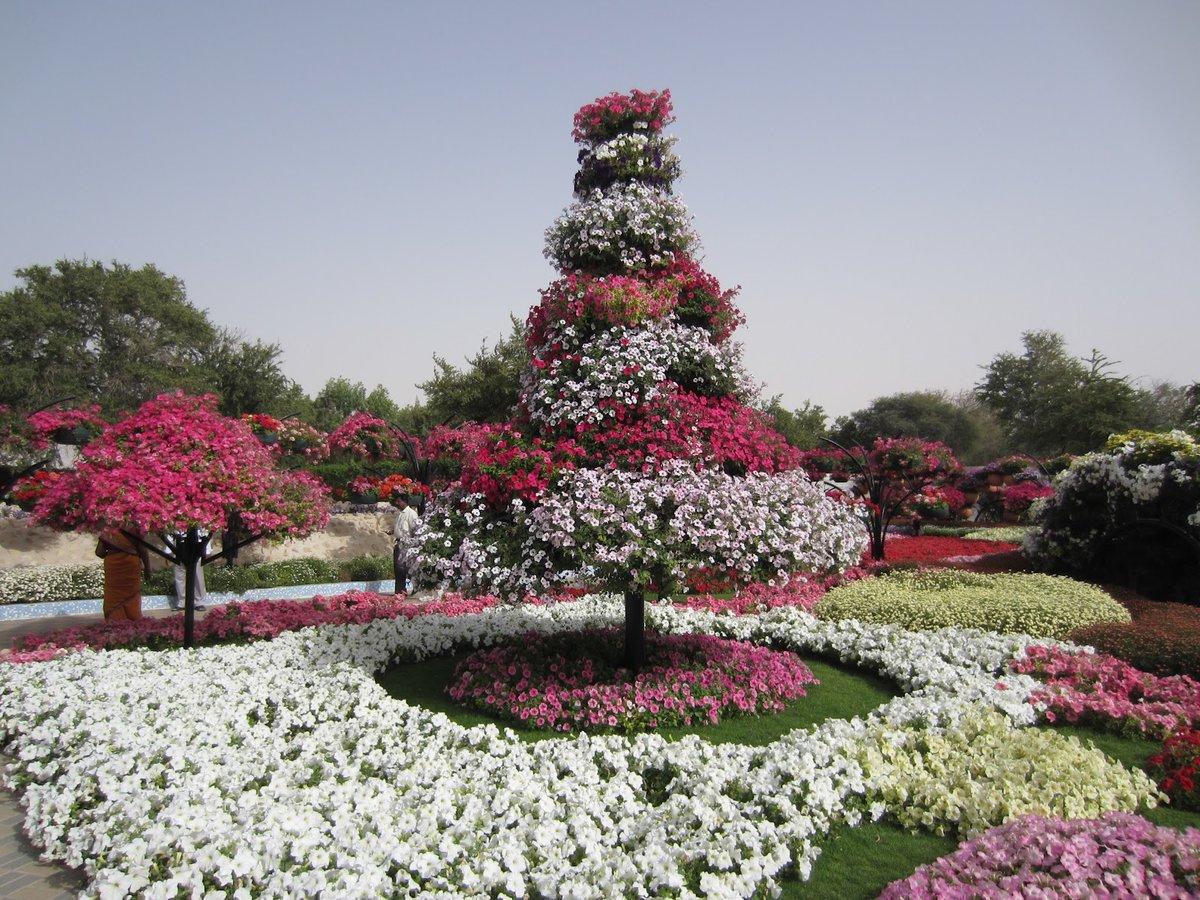 Цветы мира официальный сайт, оптом одессе