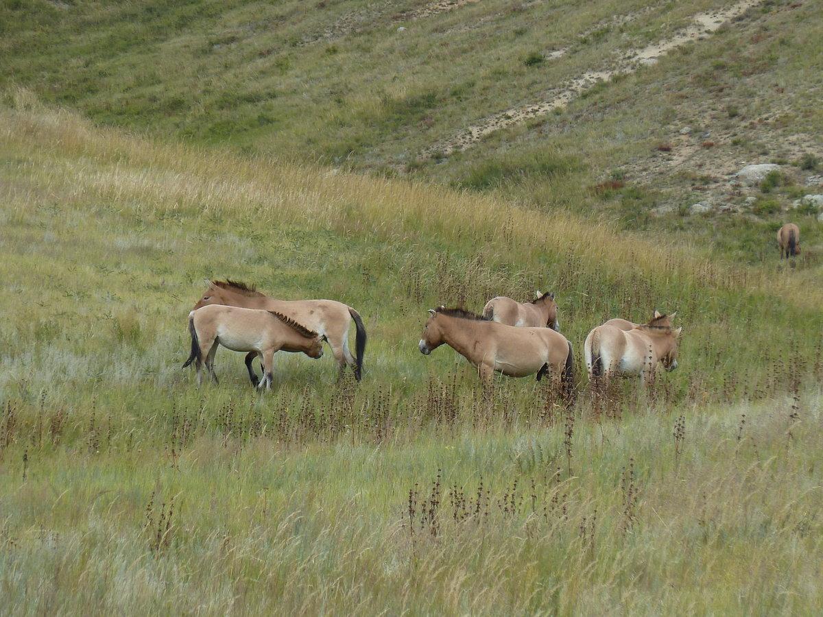 подключения сгу, фото растительного мира монголии народе