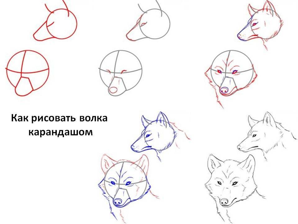 Прикольные поэтапные рисунки волка