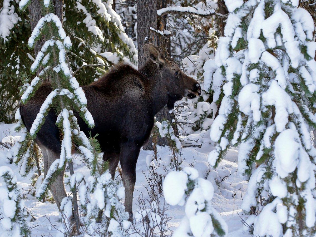 картинки животных в лесу зимой находится