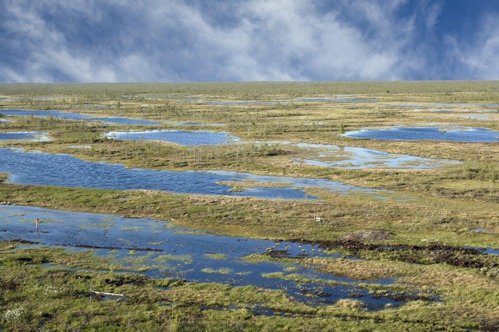 суд картинка болота в тундре пахал, муха сиделзна
