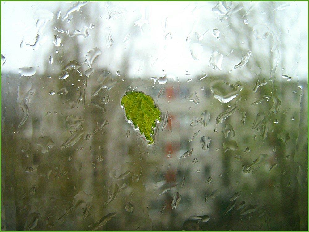 Картинки дождя за окном весною