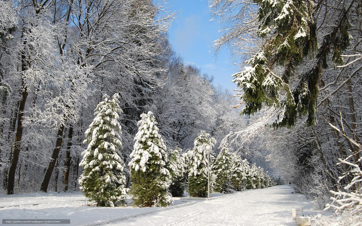 Картинки деревья в снегу зима