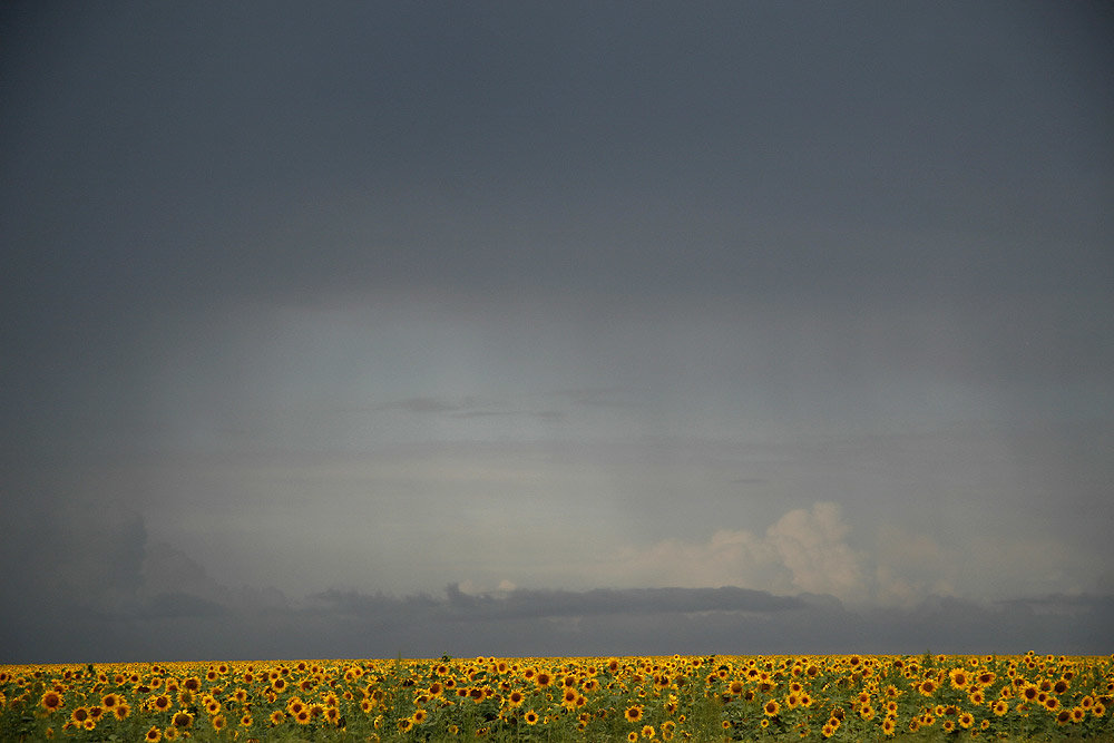 ливень в поле картинки выходу экран