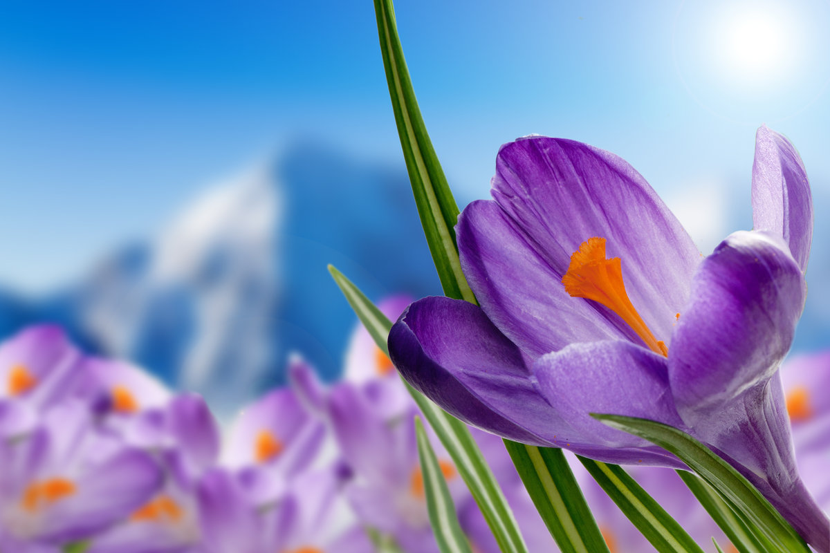 Большие, открытка весна цветы