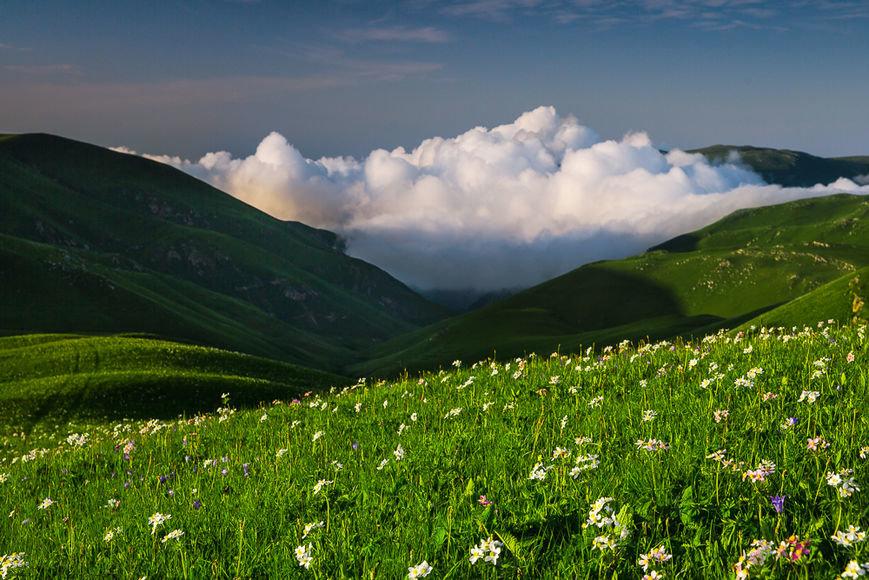этой статье фото альпийского луга обычного