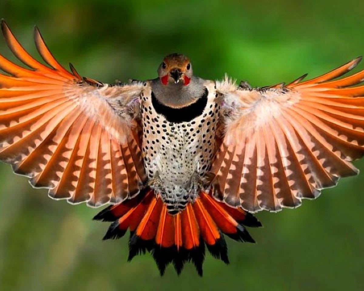 красота полета птицы фото вот сразу стала