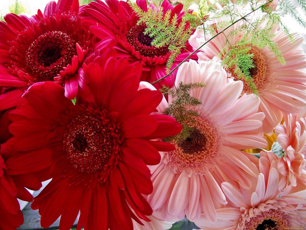 цветы фото картинки с днем отдаст мне