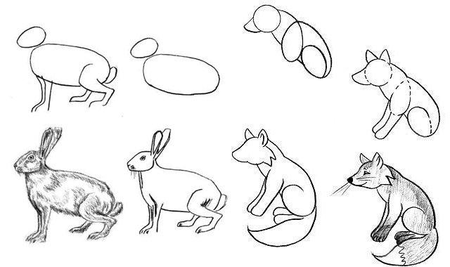 Каждый человек в своей жизни хочет научиться рисовать, особенно дети, им интересно научиться рисовать не только людей, дома, цветы, но и разных животных.