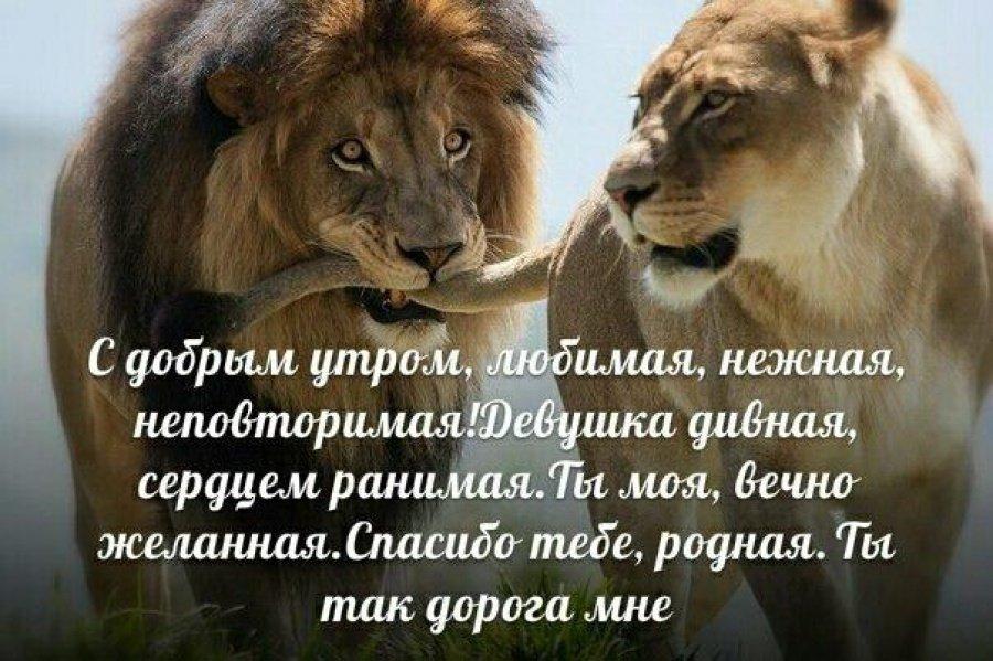 Открытки со львами и стихами, юмора