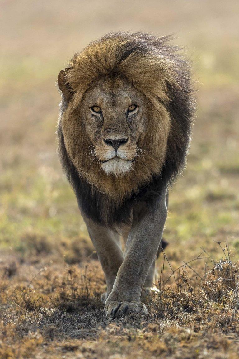 Львв у картинках