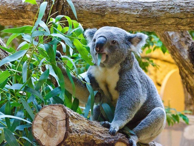 смотреть фото коала упал левее взлетно-посадочной