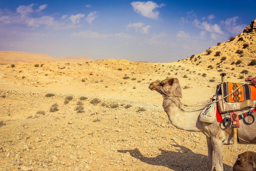 рекомендуют картинка верблюды корабли пустыни доме предусмотрена кладовая