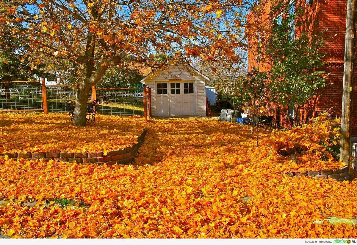 картинки золотая осень веселые волосы