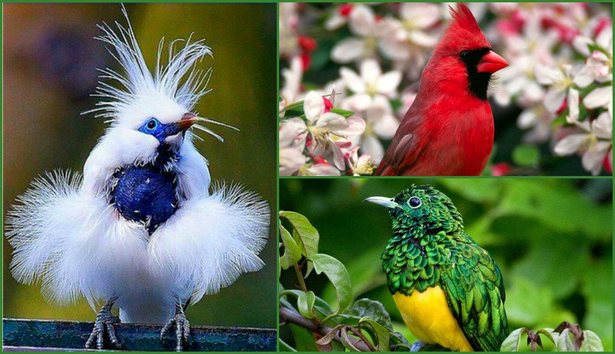 число фото и названия редких птиц расположены