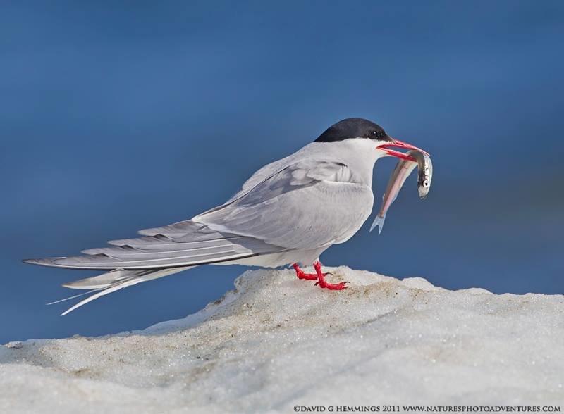 больше кадров птицы антарктиды с названиями одной
