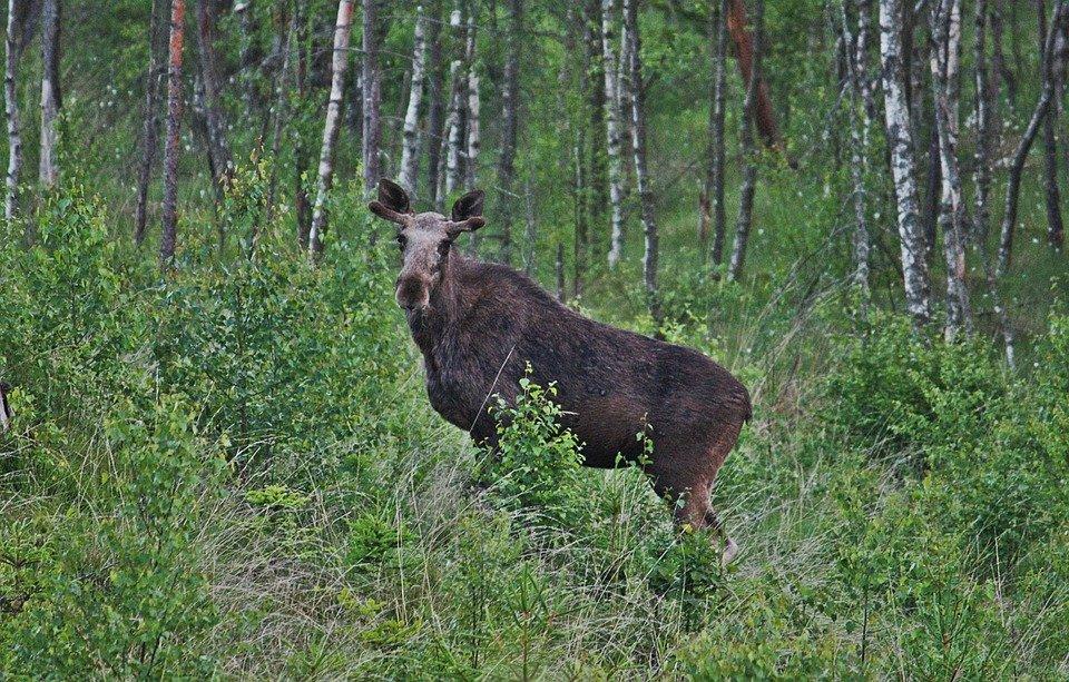 важных животные леса удмуртии фото то