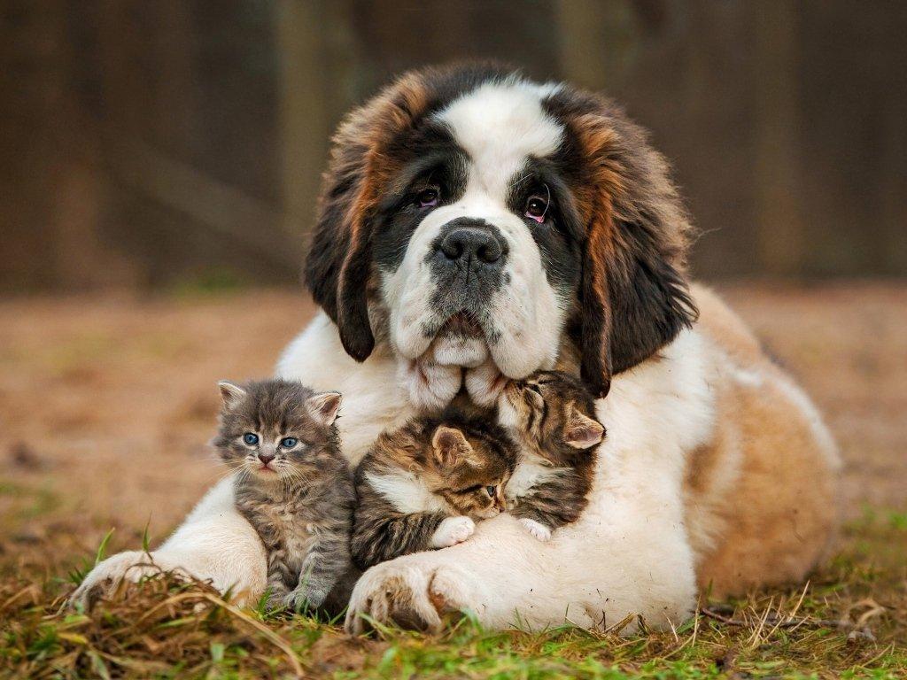 Прикольные картинки с собаками и котятами, днем