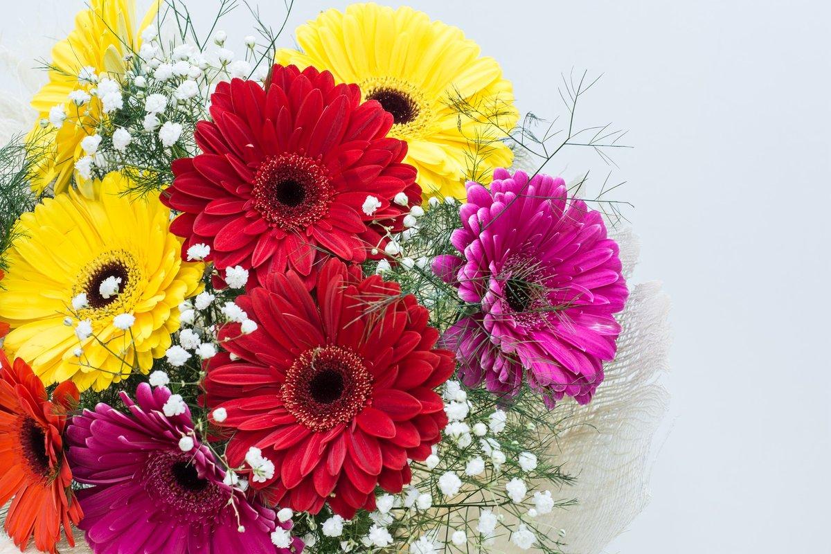 Герберы открытка, цветами для