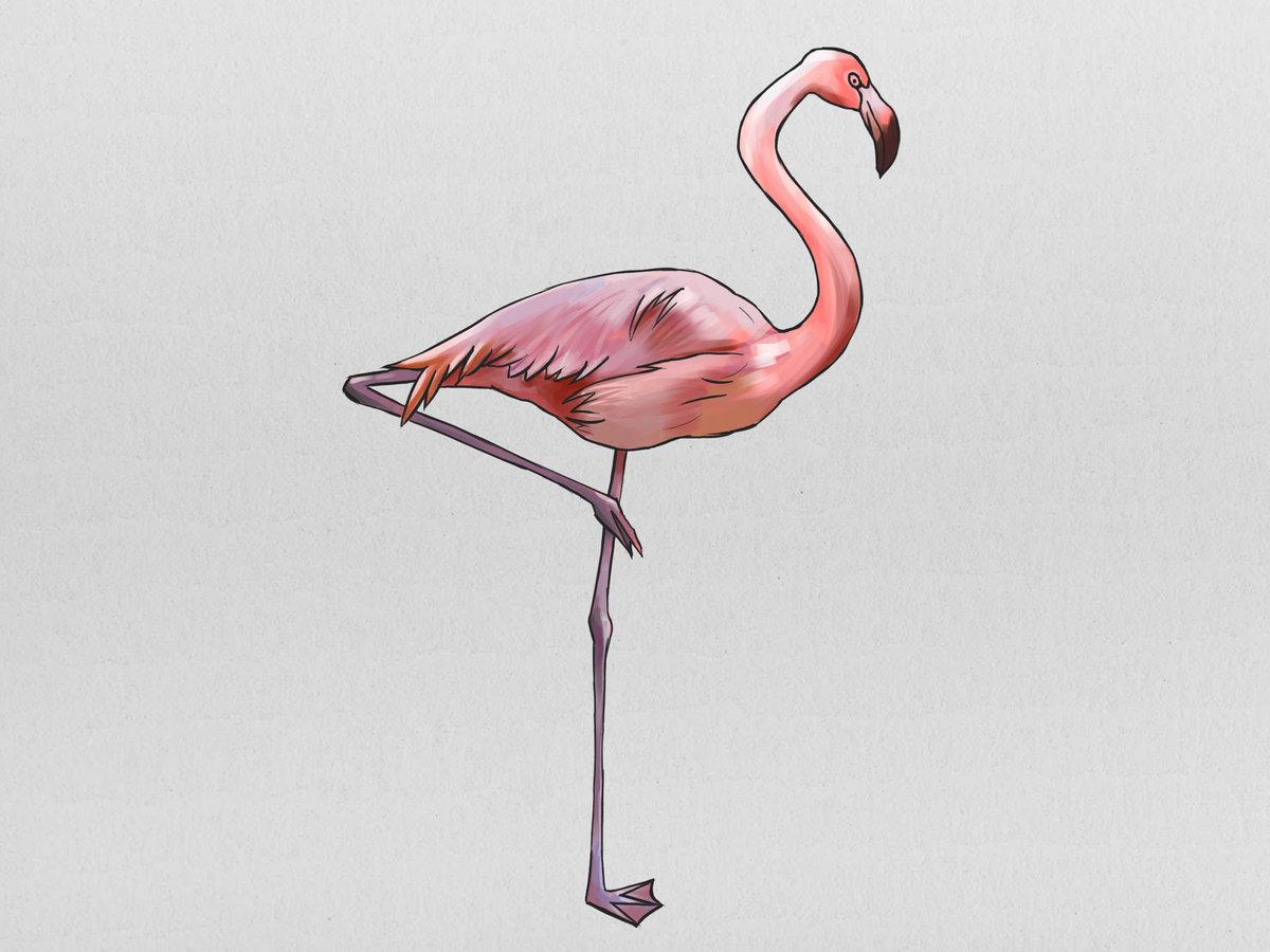 Розовый фламинго картинки для детей