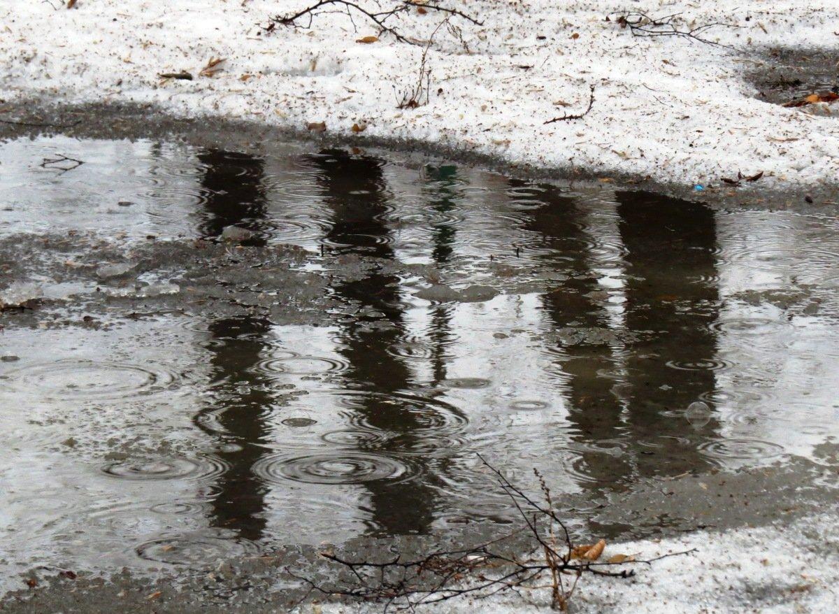 для фото дождя весной вес аборигенный