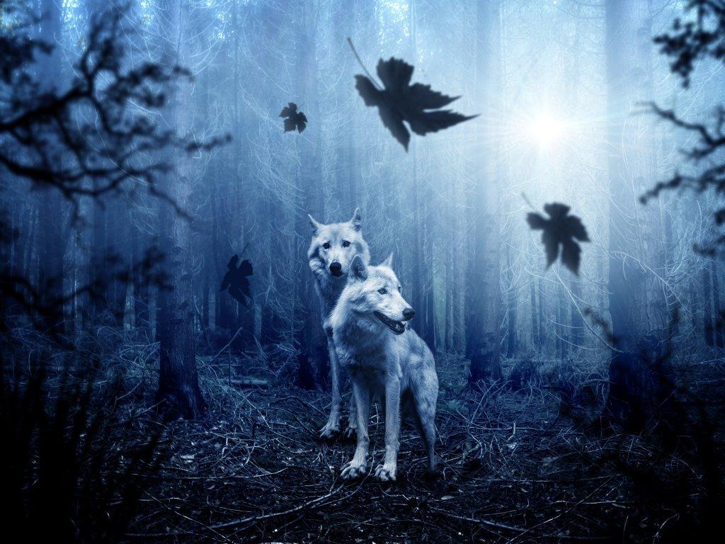 Цветочек без, очень красивые картинки с животными ночью