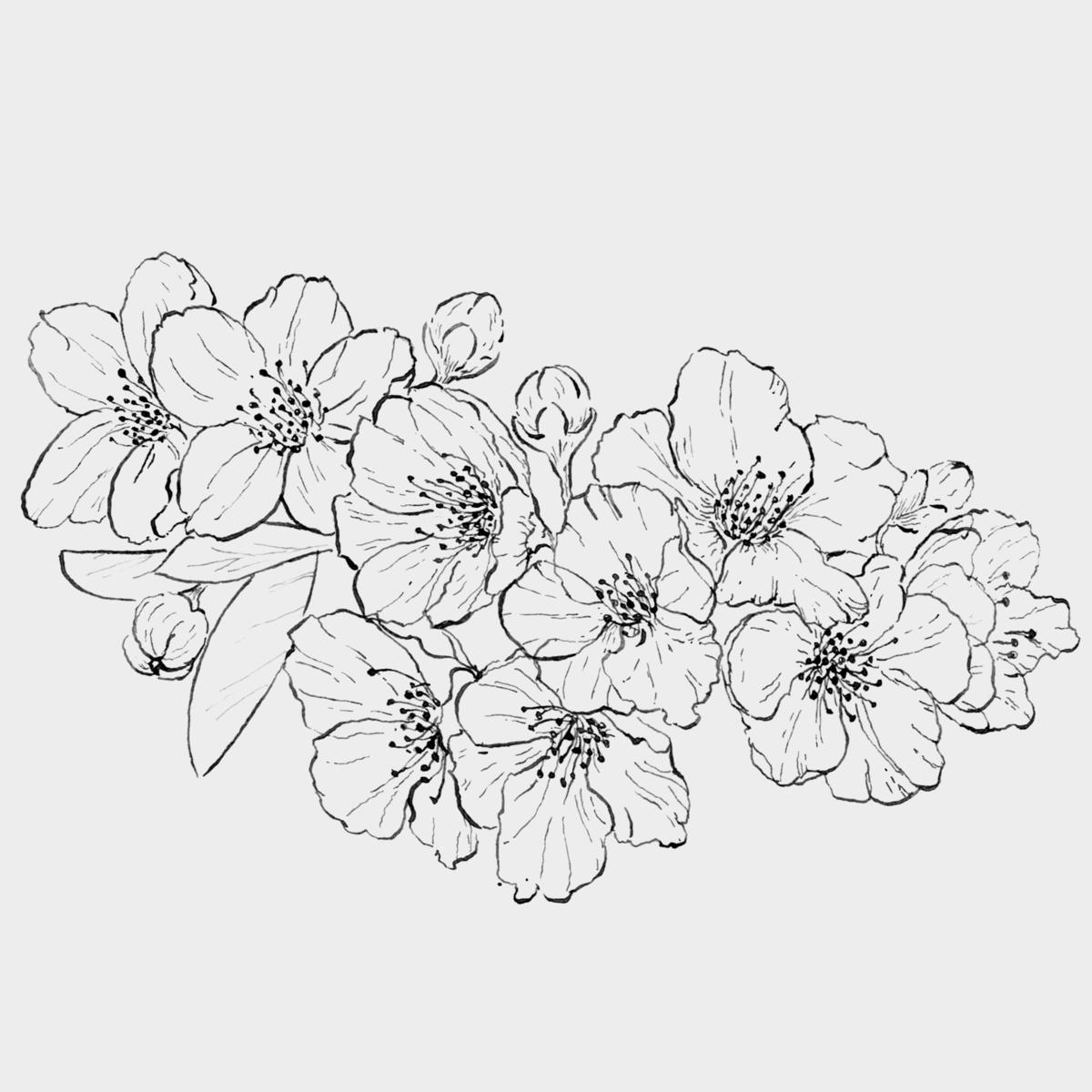 Картинки цветы на белом фоне нарисованные карандашом
