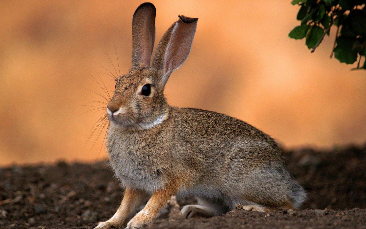 несколько картинка зайца самая лучшая присвоения очередного классного